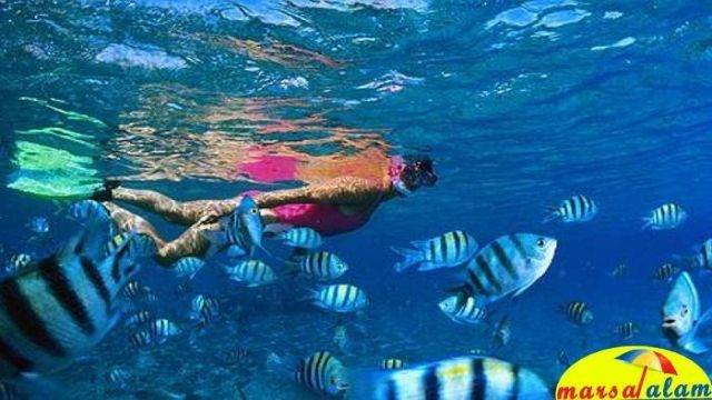 snorkeling at dolphin house from marsa alam