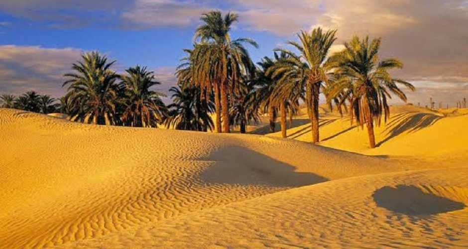 Top10 Attractions in Fayoum oasis