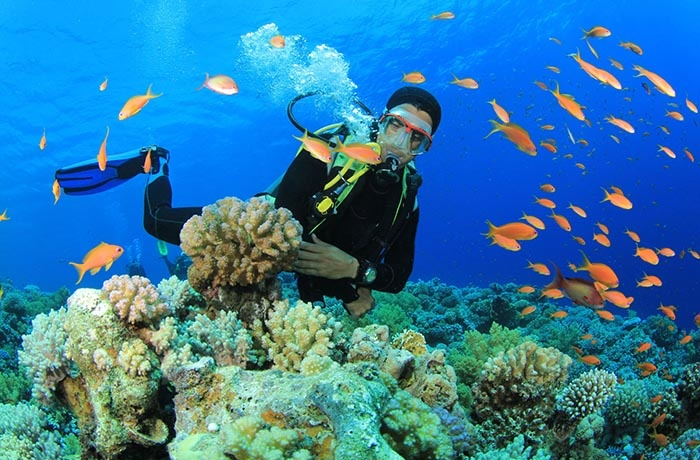Diving Tours From Marsa Alam | Marsa Alam Tours